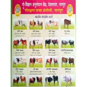 Gauvansh Breed Chart
